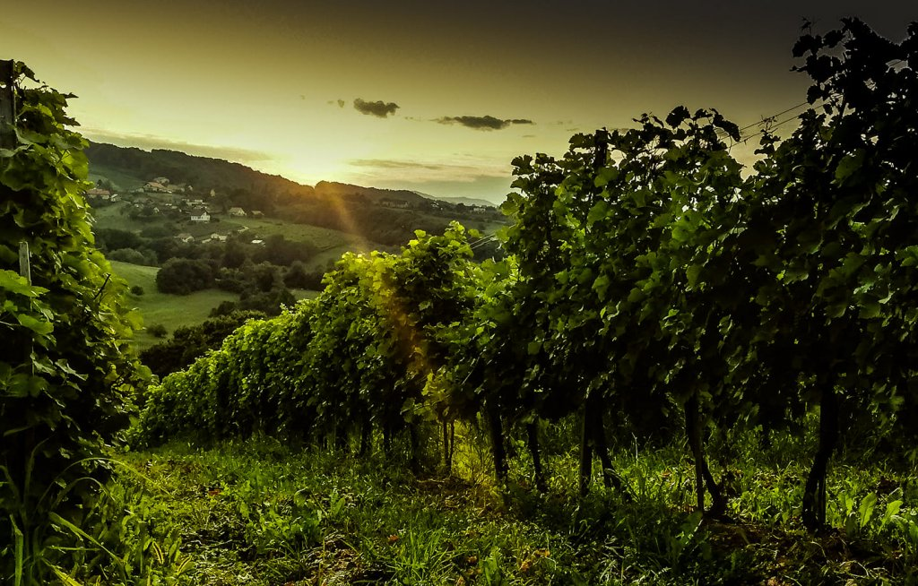 scenic view of Matic Wines vineyard at sunset